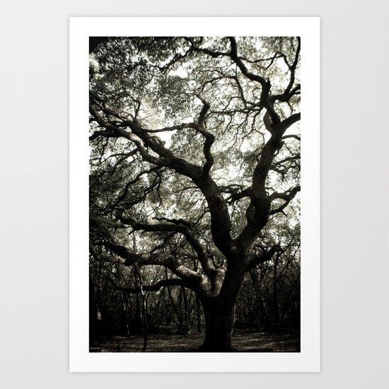The Great Live Oak Art Print