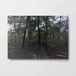 Woods of Staten Island, NY Metal Print