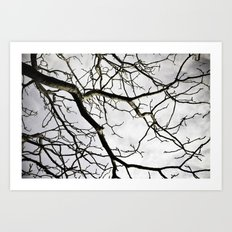 Branch Out Art Print