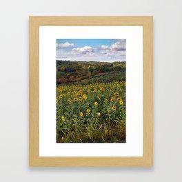 Sunflowers in the Fall Framed Art Print