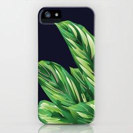 Calathea Ornata - Portrait of Cali 02 iPhone Case