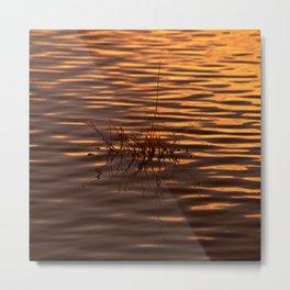 Water Garden at Sunset Metal Print
