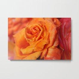 Tangerine Rose Metal Print