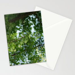 Ginkgo biloba tree in the city Stationery Cards