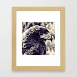 Hawk-eye Framed Art Print