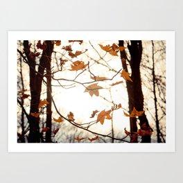 Sunlight Through the Branches Art Print