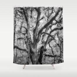Oregon White Oak Tree at William L Finley Shower Curtain