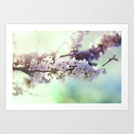 Sakura sakura Art Print
