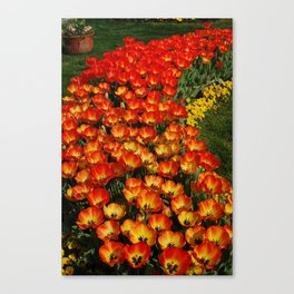 Tulips of Red and Yellow Canvas Print