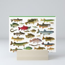 Illustrated Northeast Game Fish Identification Chart Mini Art Print