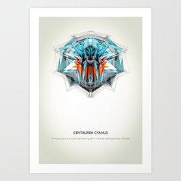 Centaurea Cyanus Art Print