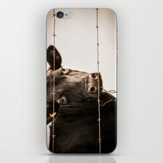 How Now, Brown Cow? iPhone & iPod Skin