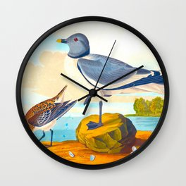 Fork-tailed Gull Wall Clock