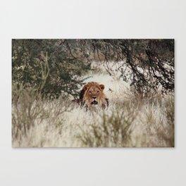 King of the Kalahari Canvas Print