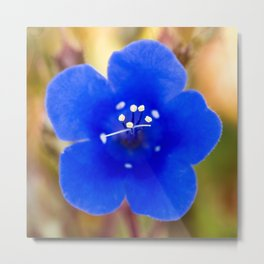 Desert Bluebell Alternate Perspective Metal Print