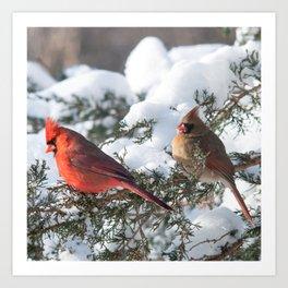 Sunny Winter Cardinals (square) Art Print