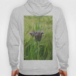 phacelia in a barley field Hoody