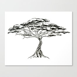 Whistling Thorn , Zen Bonsai African Tree Canvas Print
