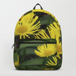 Leopard's Bane, Doronicum - Golden light in the garden Backpack