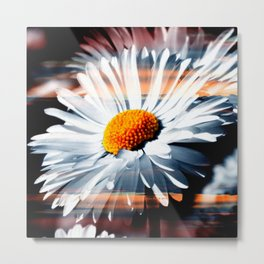 Daisy In Sunset By Annie Zeno Metal Print