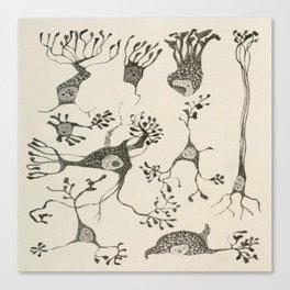 Neuron Cells Canvas Print