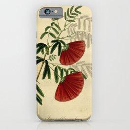 Flower inga pulcherrima5 iPhone Case