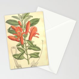 Flower 8225 columnea magnifica Stationery Cards