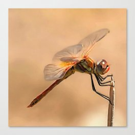 Painted Dragonfly Isolated Against Ecru Canvas Print