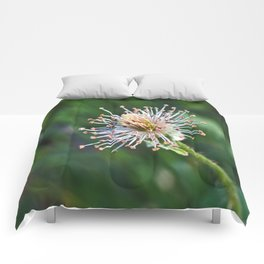 Where's My Bloom(ers)??? Comforters