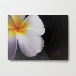 Frangipani flower Metal Print
