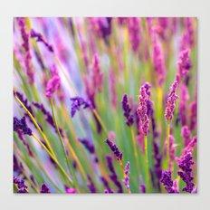 Pink & Purple Canvas Print
