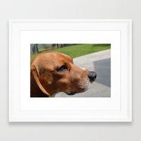 beagle Framed Art Prints featuring beagle by Tiffany Davis Kornacki