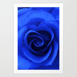 Indigo Rose Art Print