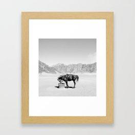 Horse Bromo Framed Art Print