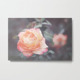 Peachy Rosie Metal Print