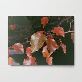 Autumn Arriving Metal Print