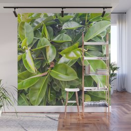 The rubber fig Wall Mural