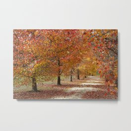 Sun Lit Tree Lined Avenue in Autumn Metal Print