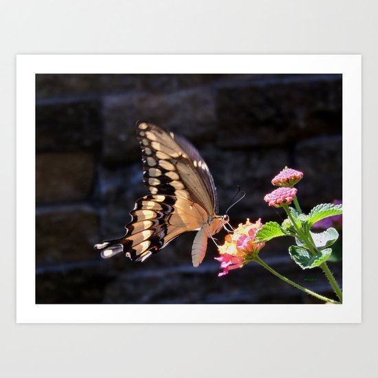Swallowtail Overexposed Art Print