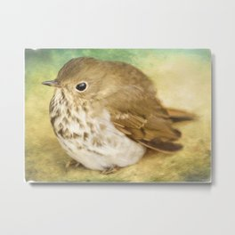 Bird Art - Patiently Waiting Metal Print