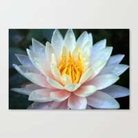 asian Canvas Prints featuring Asian Lily by Adrian Evans