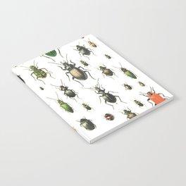 bugs Notebook
