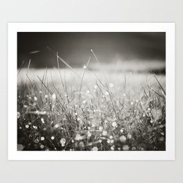 Morning Dew Nature Photography, Sparkle Bokeh Grass, Sepia Sparkly Photograph Art Print