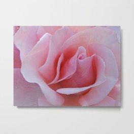 Rose Petal Pink Metal Print