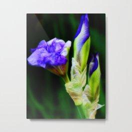 Purple Iris and Buds Metal Print