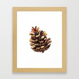 Fir cone Framed Art Print