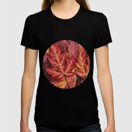 Colorful Autumn Maple Leaf Indian Summer Red T-shirt
