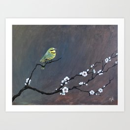 Perch Art Print