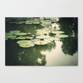 lilypads Canvas Print
