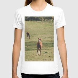 Field of Horses in Ireland  T-shirt